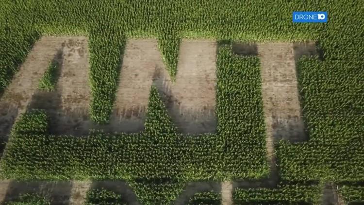 Drone 10: Corn maze in Union County
