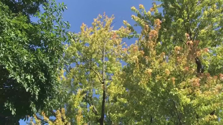 Unseasonably warm start to October delays fall colors