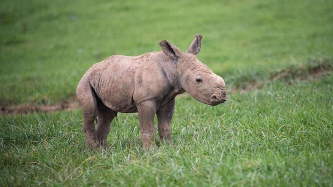 The Wilds welcomes birth of white rhino