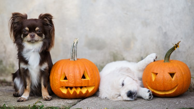 Keeping trick-or-treat paw-sitive for your pets
