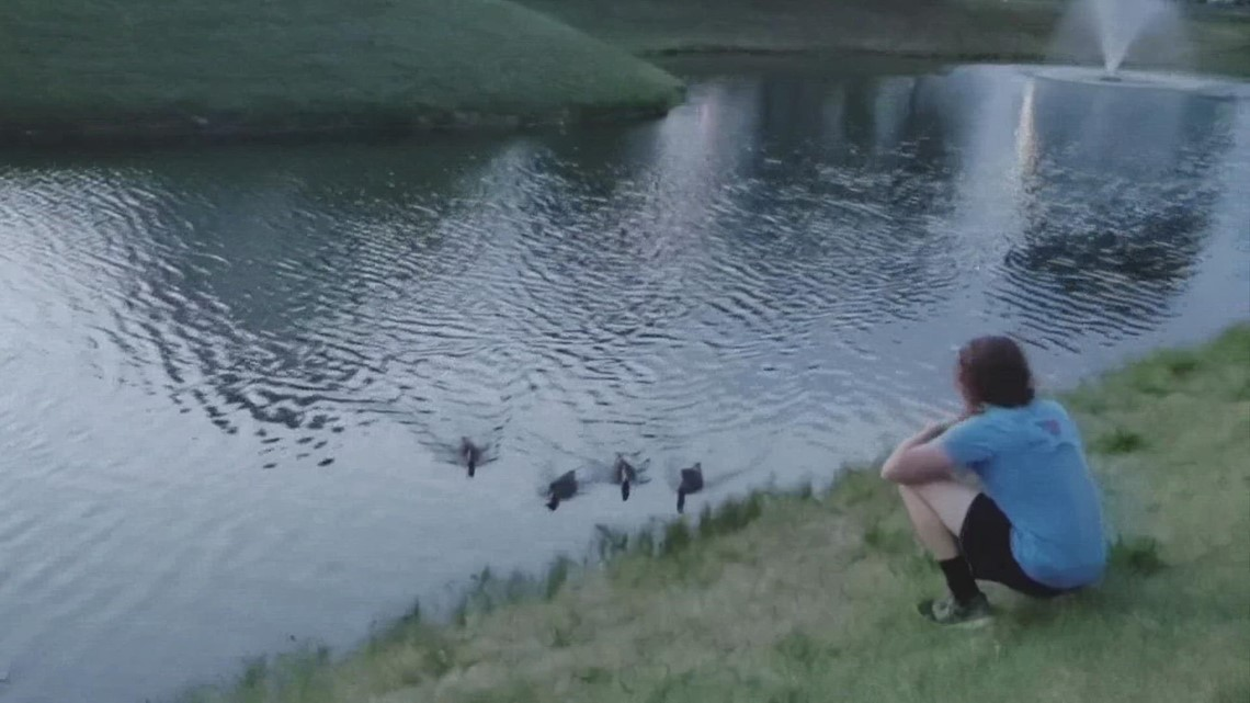 Delaware teen earns nickname 'duck dad' after taking care of 4 ducks