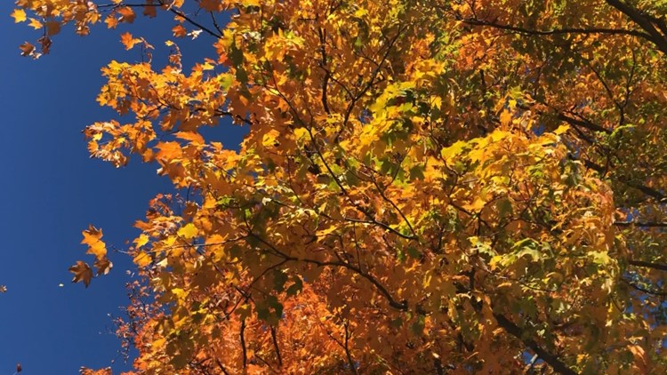 Warm start to autumn made for delays in fall foliage