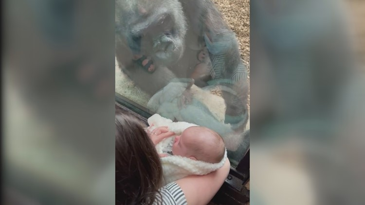 Mother forms unique maternal bond with gorilla
