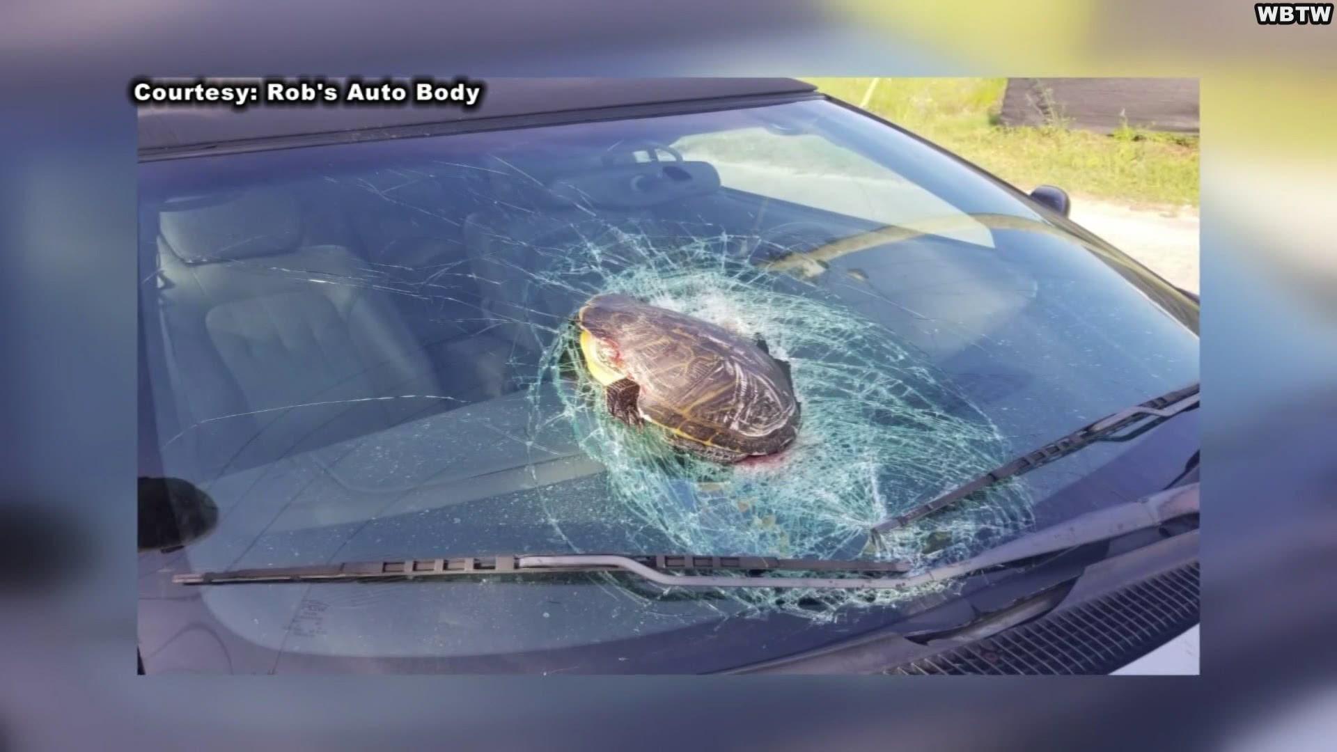 I Still Don T Understand Flying Tortoise Crashes Into Man S Windshield On Sc Highway 5newsonline Com