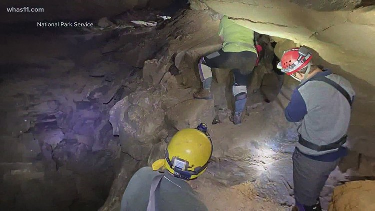 Scientists find evidence of shark bigger than Jaws at Mammoth Cave