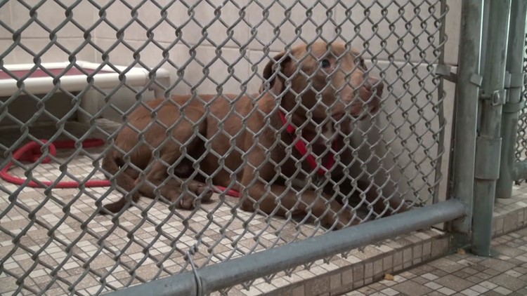 Dogs rescued after arrest warrant is served in Wayne County