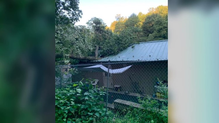 Animal shelter's dog house badly damaged by fallen tree in Schuylkill County