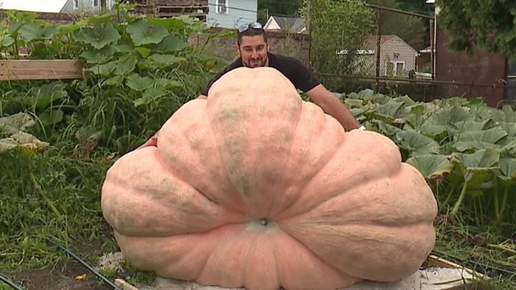 A giant pumpkin grows in Taylor