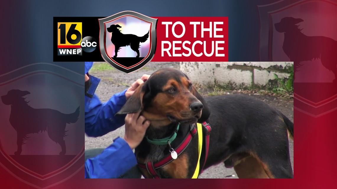 16 To The Rescue: Wyatt
