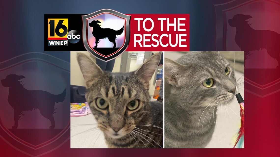 16 To The Rescue: Rye, Sammy, and friends