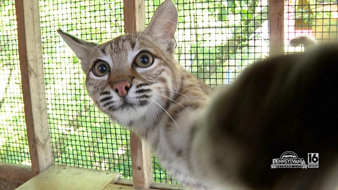 Pocono Wildlife Education Animals