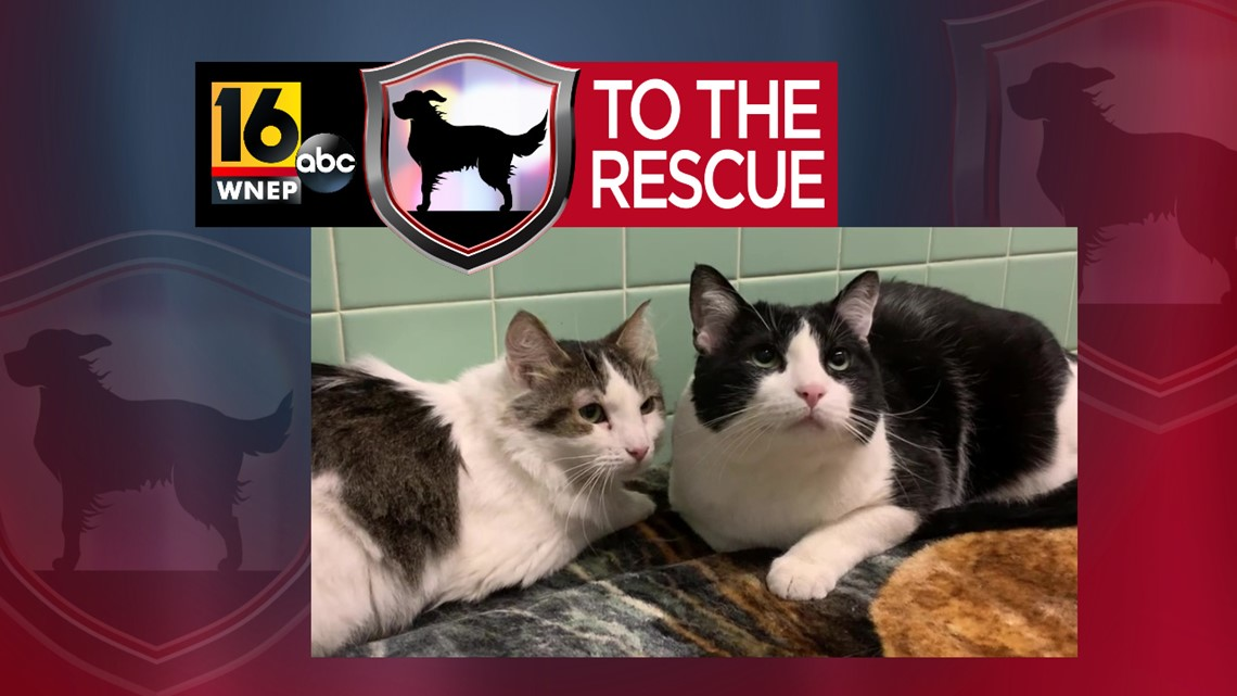16 To The Rescue: Cupcake and Sheldon