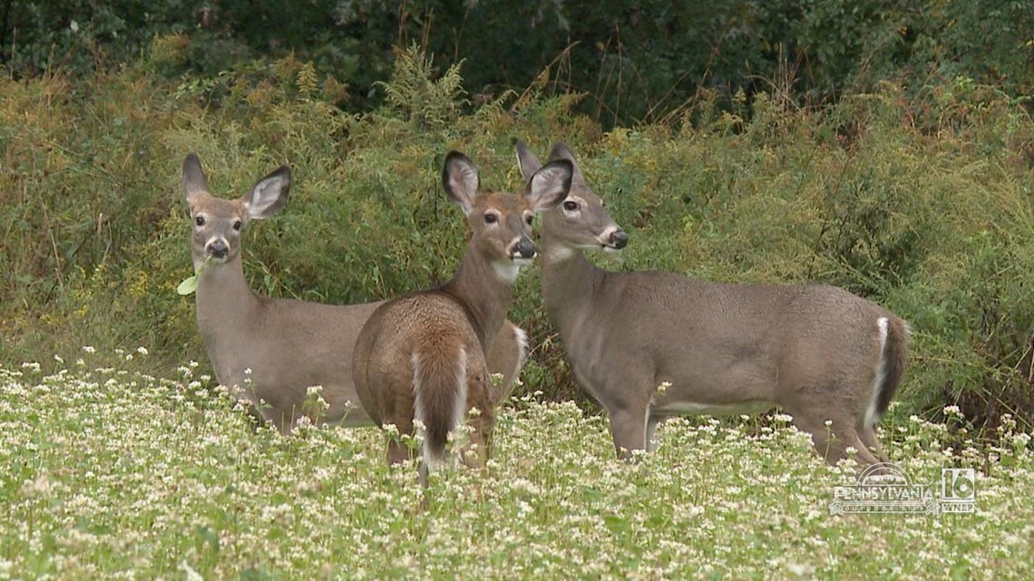 Help Slow the Spread of CWD