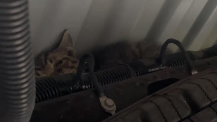 Stowaway kitten makes 20-hour trip in U-Haul truck