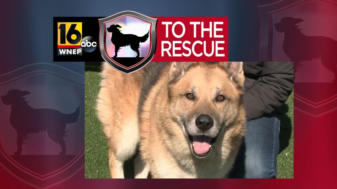 16 To The Rescue: Koda