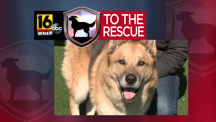16 To The Rescue: Koda