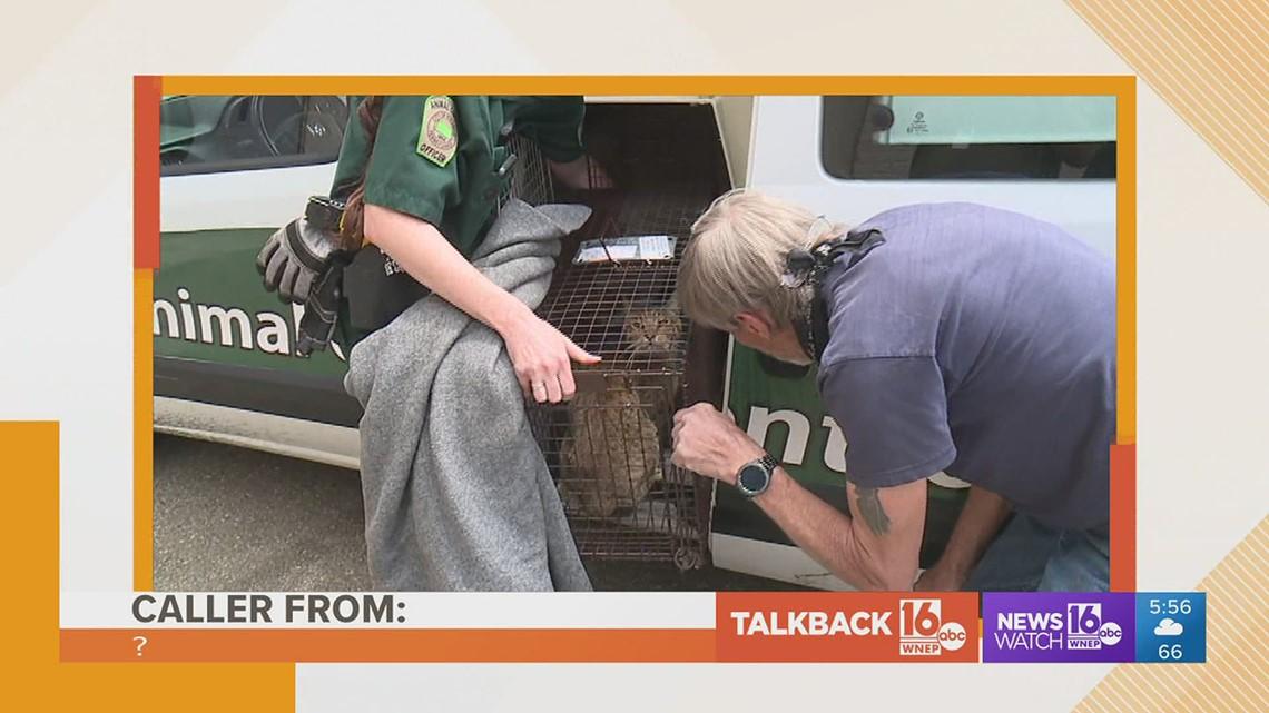 Talkback 16: The cat that closed a school