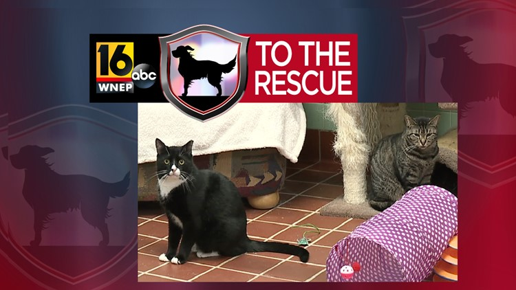 16 To The Rescue: Barn cats