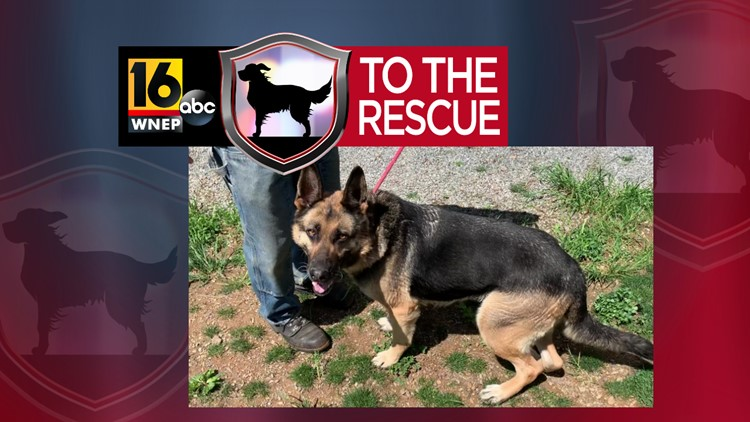 16 To The Rescue: Cindy