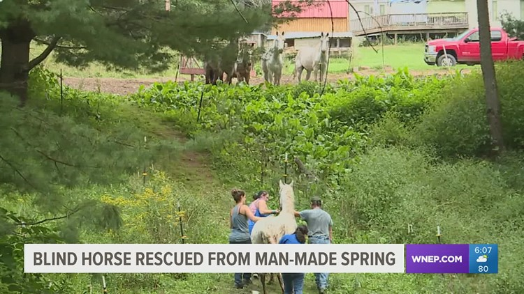 23-year-old blind horse rescued in Lycoming County