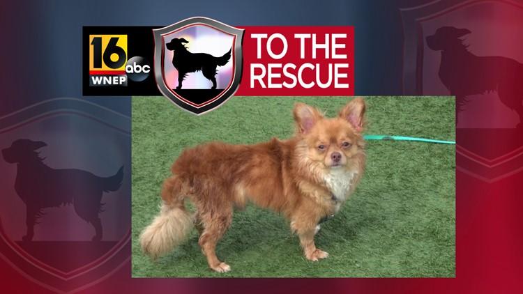 16 To The Rescue: Chico