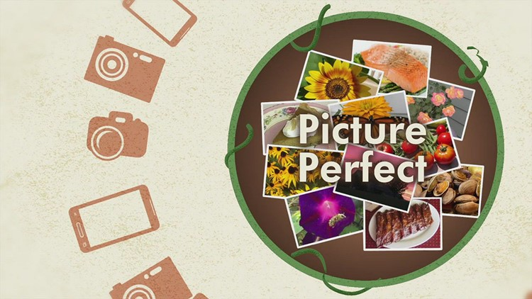 Your Picture Perfect