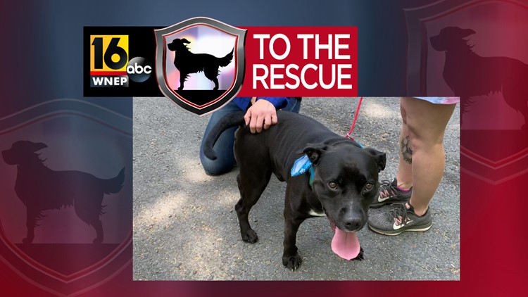 16 To The Rescue: Rocco