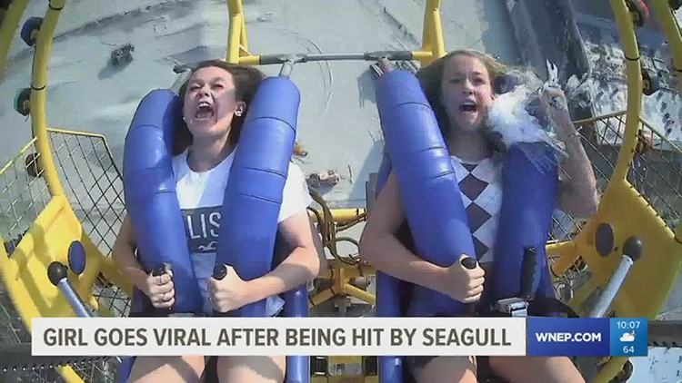 Seagull flies in face of Carbon County teen on amusement park ride