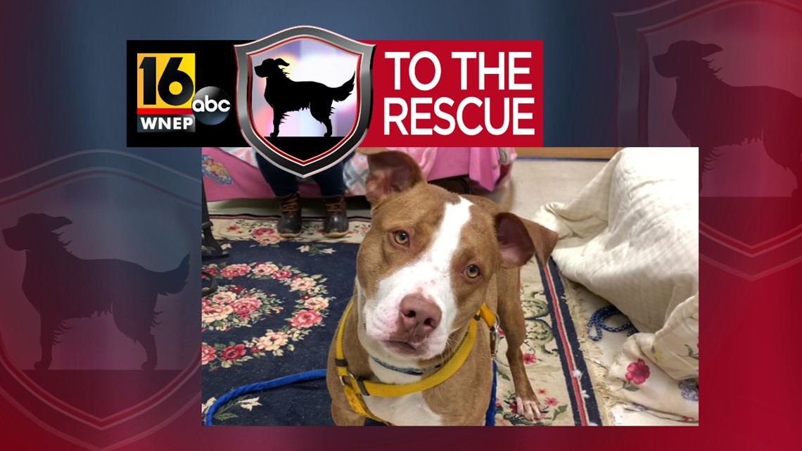 16 To The Rescue: Rocky