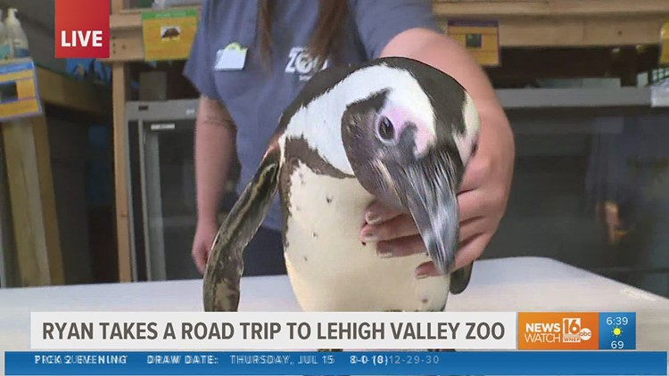 Waddle into summer fun: penguins and more create hot spot to visit near our area