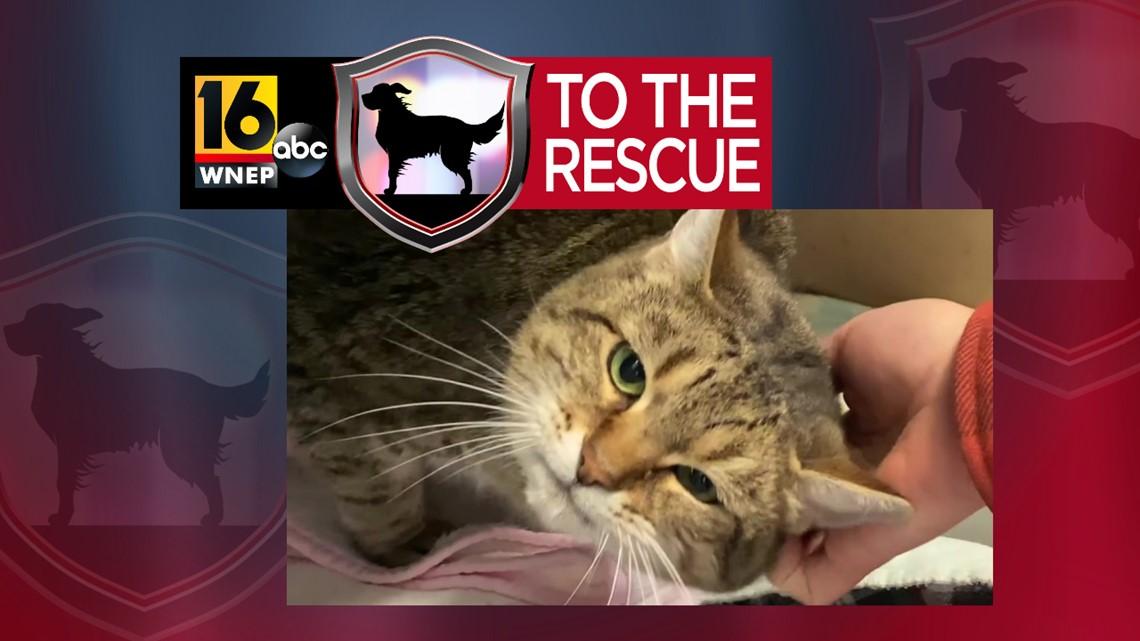 16 To The Rescue: Dottie
