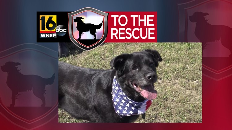 16 To The Rescue: Max