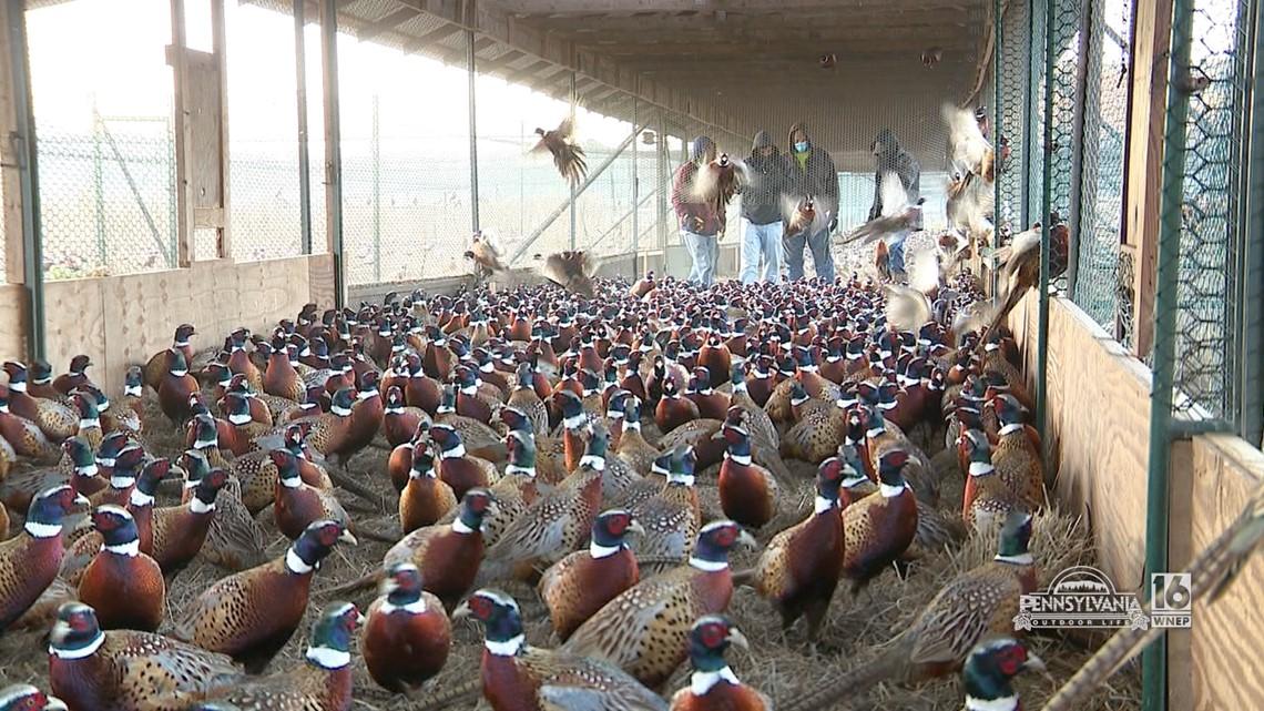 Loyalsock Pheasant Farm