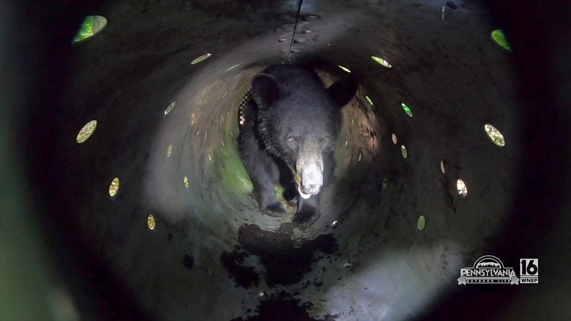Black Bear Processing