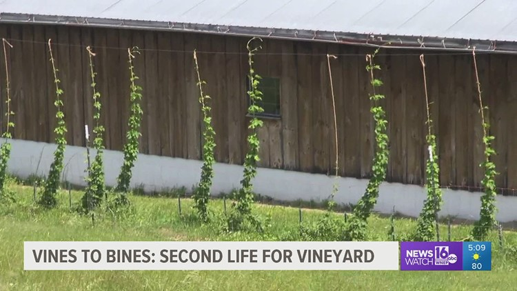 Vines to bines: Second life for vineyard in Wayne County