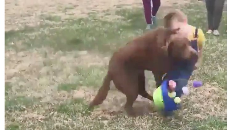 Ouch!  Video of dog's tackle at Easter egg hunt goes viral