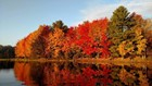 Fall Foliage 2019: This Map Shows Where and When to See Peak Colors