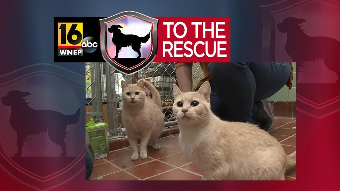 16 To The Rescue: Precious and Priya