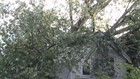 Tree Falls on Two Buildings in Scranton During Storms