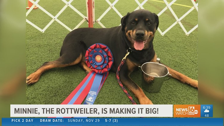 Reasons to Smile: Meet Minnie the Rottweiler