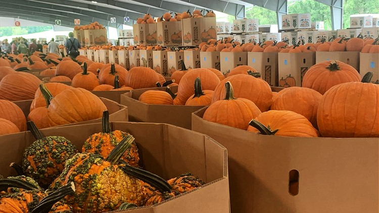 Pumpkin auction in Union County draws buyers