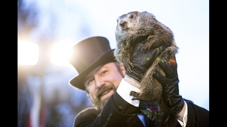 PETA Calls for Punxsutawney Phil to Be Replaced With an AI Groundhog