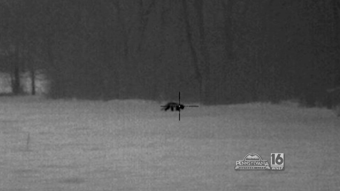 Thermal Imaging Fox Hunt