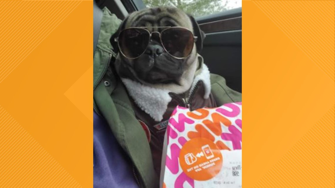 Pug named 'Polo' from Wayne County becomes Facebook phenomenon during pandemic