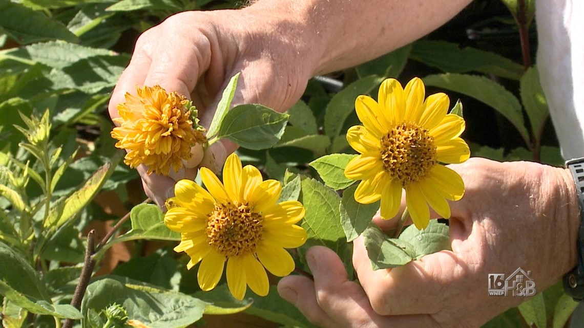 Your Favorite Late Summer Yellow Blooms Are Here!