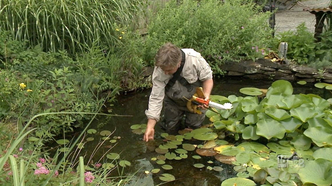 Sprucing Up Your Pond
