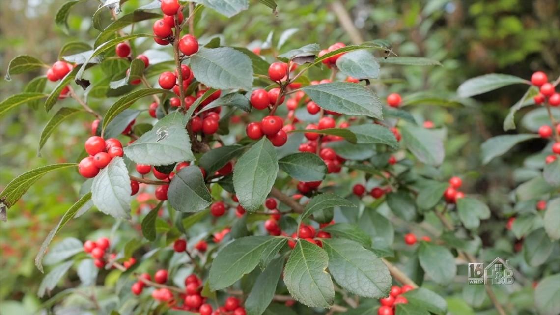 Winter Berries