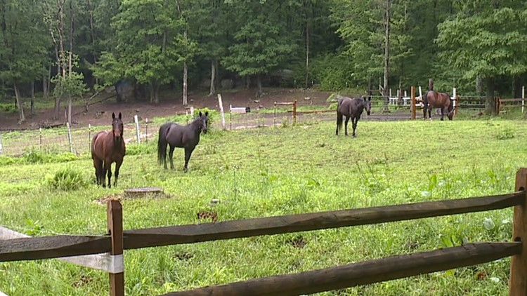 Lackawanna County disbands sheriff's mounted unit, horses to continue therapy work