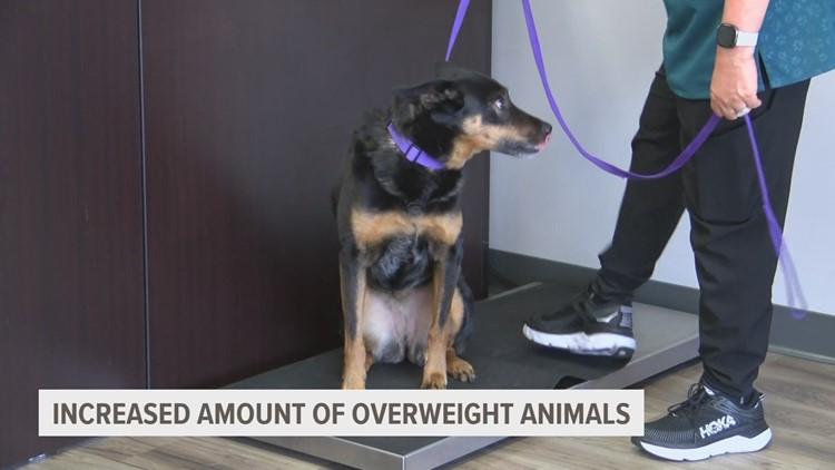 Obesity in dogs is climbing—a local vet shares tips for keeping pets healthy