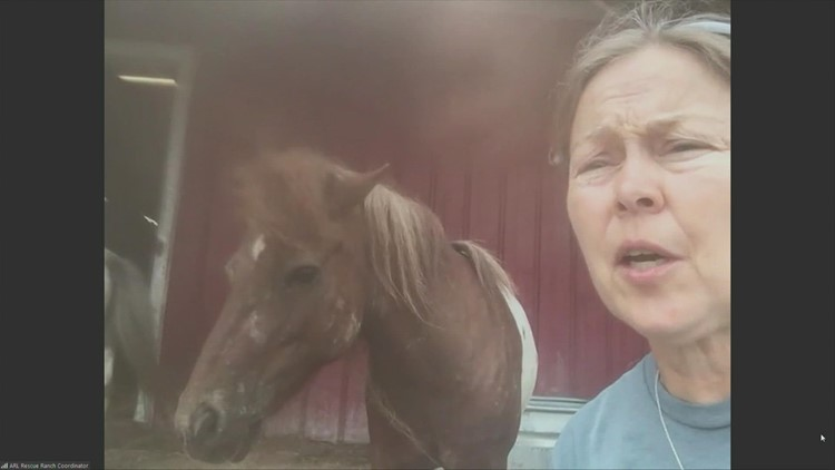 Rescued Miniature Horses  and getting a home for a horse you can no longer keep